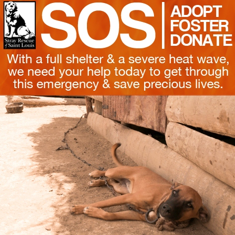 Help Save A Life From The Scorching Summer Heat!