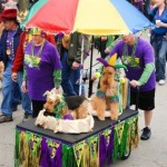 mardi gras pet parade