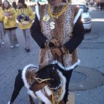 mardi gras pet parade