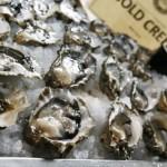 Schalfy Oyster Festival