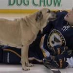 backes pet rescue