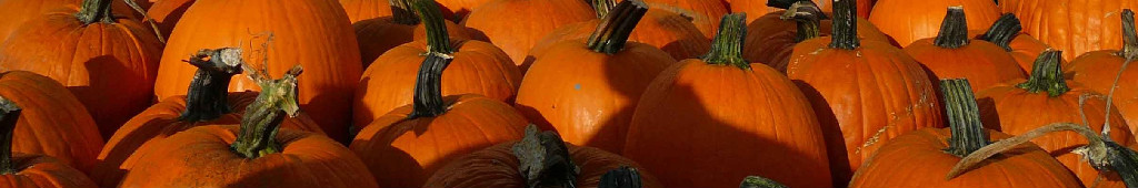 Pumpkin Patches and October Festivals