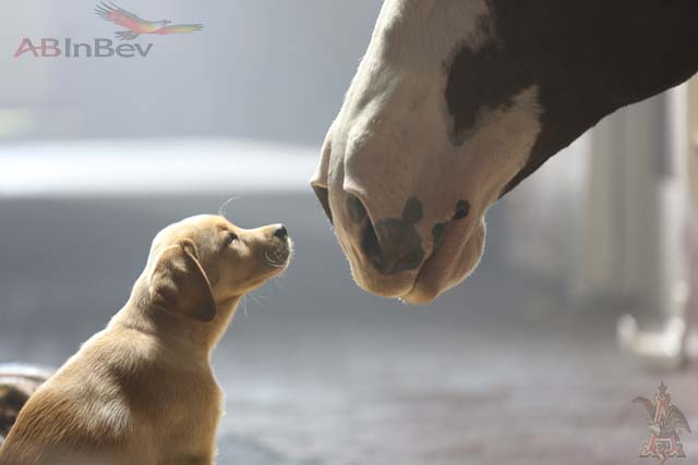 Budweiser's 2014 Super Bowl Commerical