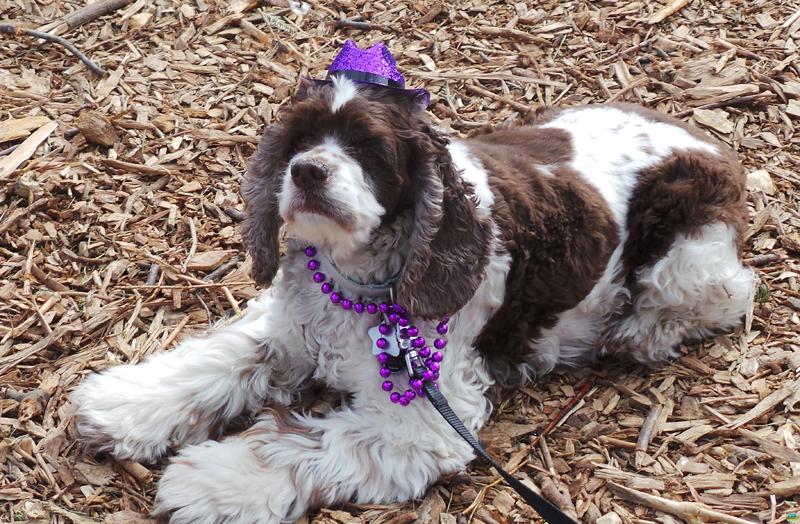 Beggin' Pet Parade, PetSmart Wiener Dog Derby and Barenaked Ladies Photos