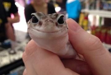 St. Louis Reptile Show