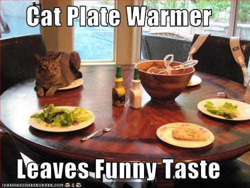 cat plate warmer