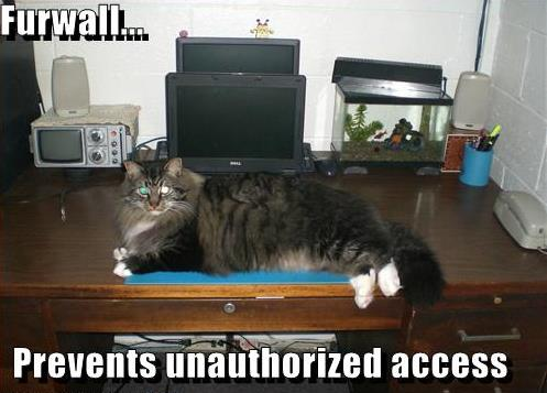 Funny Cat Memes To Get You Through The Day