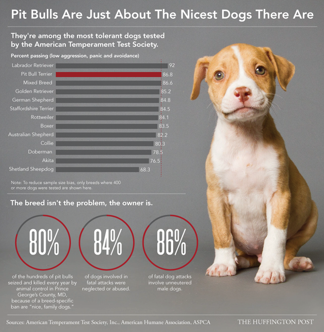 Pit Bulls are actually better than most dogs.