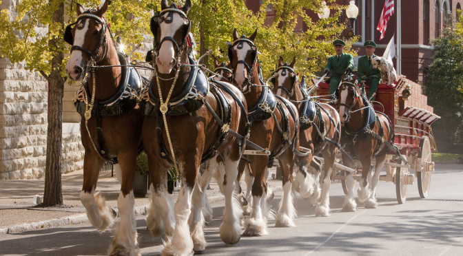 Budweiser Clydesdales & U.S. Marines Team Up For Toys for Tots Drive