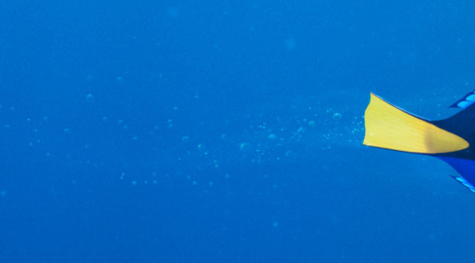Ellen Debuts New Finding Dory Trailer