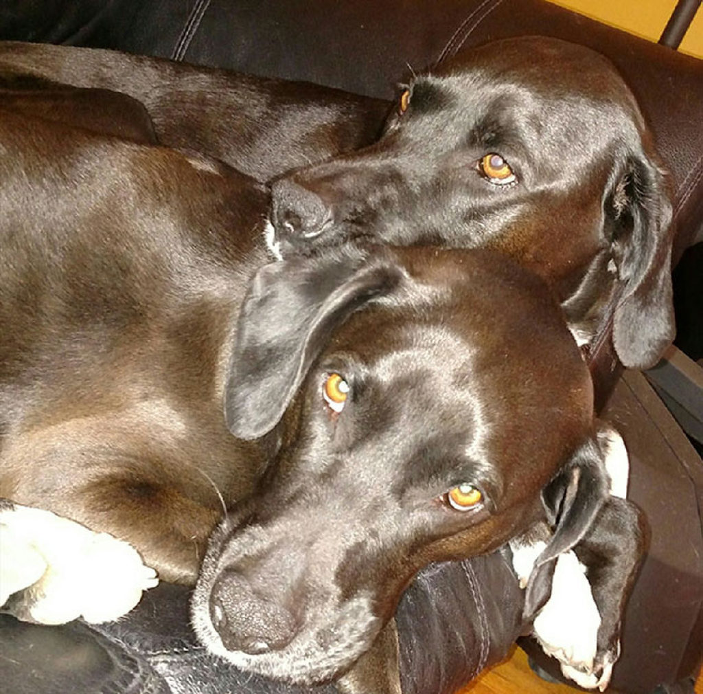 Kay Kay and her sister Abby. Kay Kay the dog was rescued from under a house in Jefferson City recently.