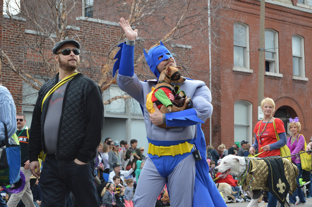Batman St. Louis Mardi Gras Pet Parade